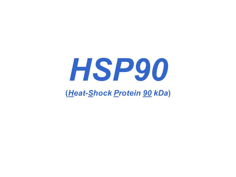 HSP90 (Heat-Shock Protein 90 kDa)