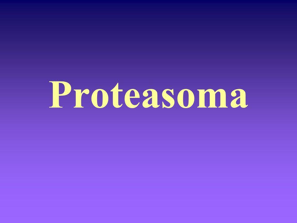 Proteasoma