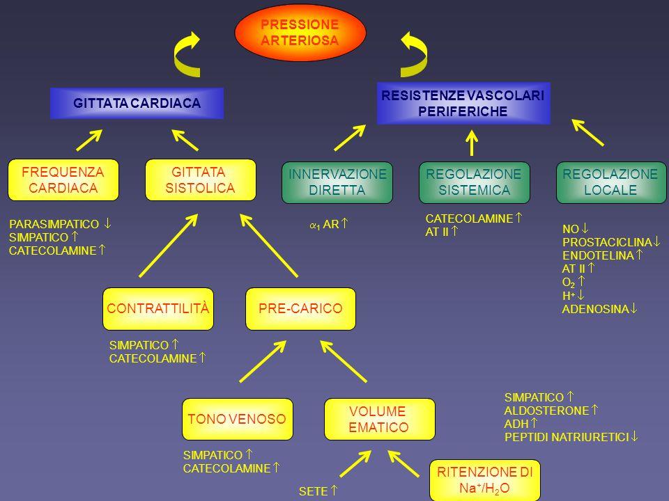PRESSIONE ARTERIOSA GITTATA CARDIACA RESISTENZE VASCOLARI PERIFERICHE FREQUENZA CARDIACA GITTATA SISTOLICA INNERVAZIONE DIRETTA REGOLAZIONE SISTEMICA REGOLAZIONE LOCALE CONTRATTILITÀPRE-CARICO TONO VENOSO VOLUME EMATICO RITENZIONE DI Na + /H 2 O PARASIMPATICO SIMPATICO CATECOLAMINE SIMPATICO CATECOLAMINE SIMPATICO CATECOLAMINE SETE SIMPATICO ALDOSTERONE ADH PEPTIDI NATRIURETICI 1 AR CATECOLAMINE AT II NO PROSTACICLINA ENDOTELINA AT II O 2 H + ADENOSINA