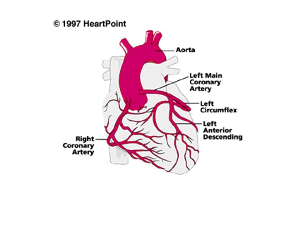 TERAPIA DELLE CORONAROPATIE CRONICHE (angina stabile) 1.β-bloccanti 2.bloccanti dei canali del Ca 2+ 3.nitrati 4.ranolazina 5.aspirina 6.farmaci ipolipemizzanti