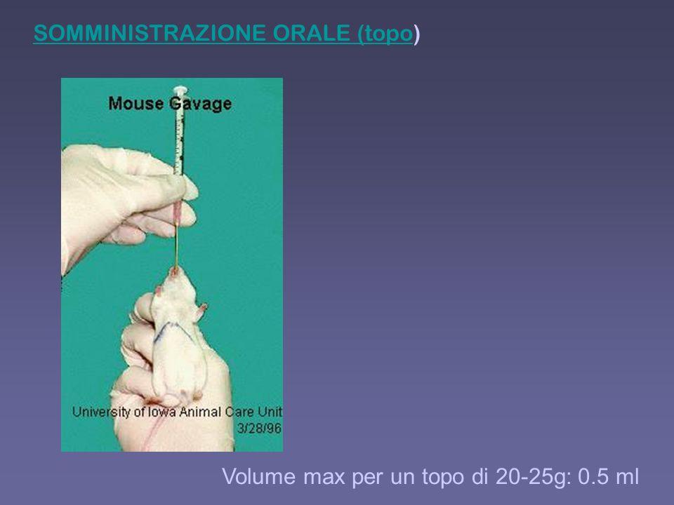 SOMMINISTRAZIONE ORALE (topoSOMMINISTRAZIONE ORALE (topo) Volume max per un topo di 20-25g: 0.5 ml