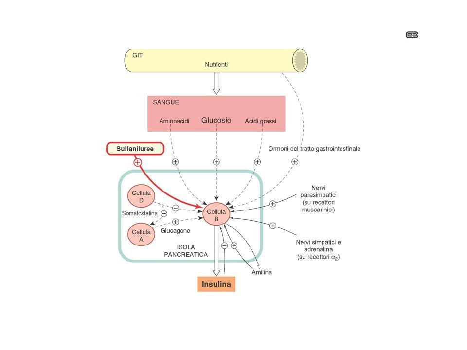 incretins (GLP1, GIP) incretins (GLP1, GIP) Stimolano la liberazione di insulina Stimolano la liberazione di insulina Inibiscono la liberazione di glucagone Inibiscono la liberazione di glucagone Diminuzione del glucosio ematico Diminuzione del glucosio ematico GLP1 = glucagon-like peptide 1 GIP = glucose-dependent insulinotropic peptide