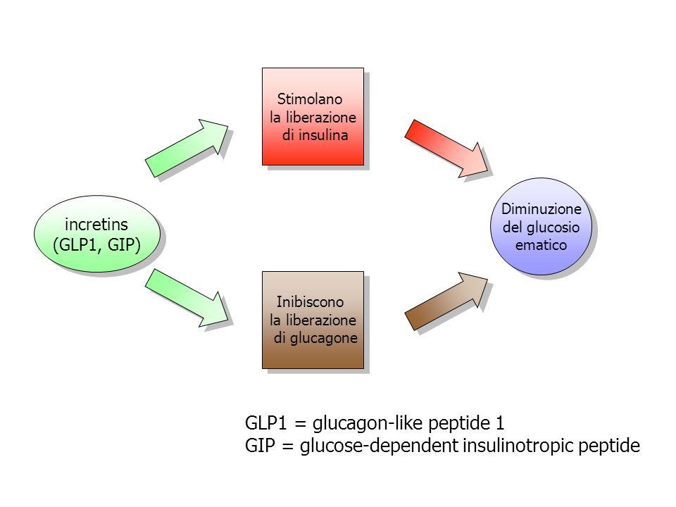 incretins (GLP1, GIP) incretins (GLP1, GIP) Stimolano la liberazione di insulina Stimolano la liberazione di insulina Inibiscono la liberazione di glu