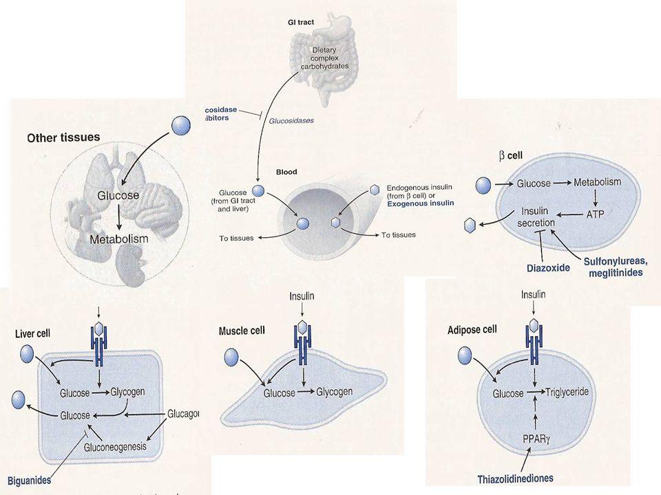 incretins (GLP1, GIP) incretins (GLP1, GIP) Stimolano la liberazione di insulina Stimolano la liberazione di insulina Inibiscono la liberazione di glucagone Inibiscono la liberazione di glucagone Diminuzione del glucosio ematico Diminuzione del glucosio ematico Inattivate da DPP-IV Inattivate da DPP-IV GLP1 = glucagon-like peptide 1 GIP = glucose-dependent insulinotropic peptide DPP-IV = dipeptidyl peptidase IV