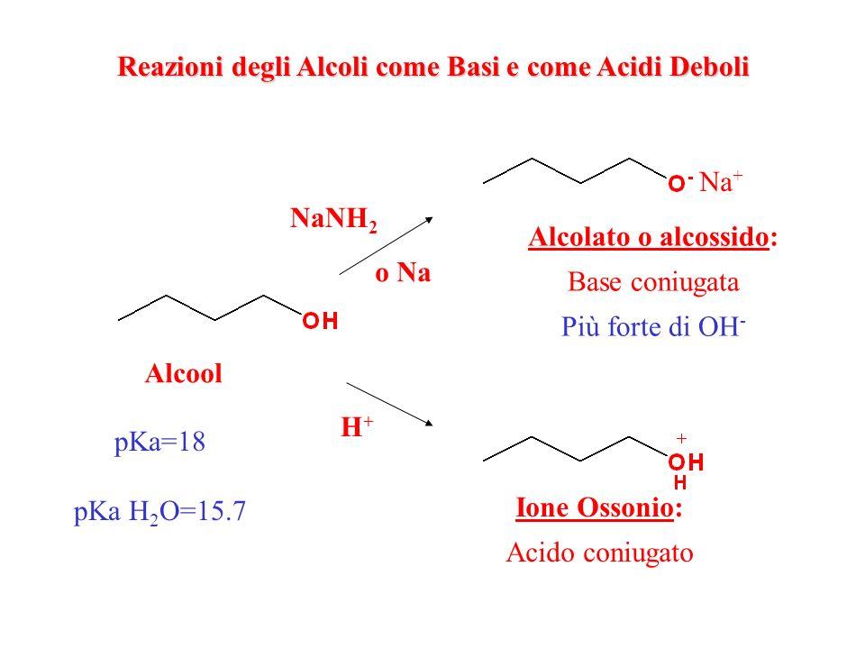 Reazioni degli Alcoli come Basi e come Acidi Deboli Alcool NaNH 2 o Na Na + Alcolato o alcossido: Base coniugata Più forte di OH - H+H+ Ione Ossonio: