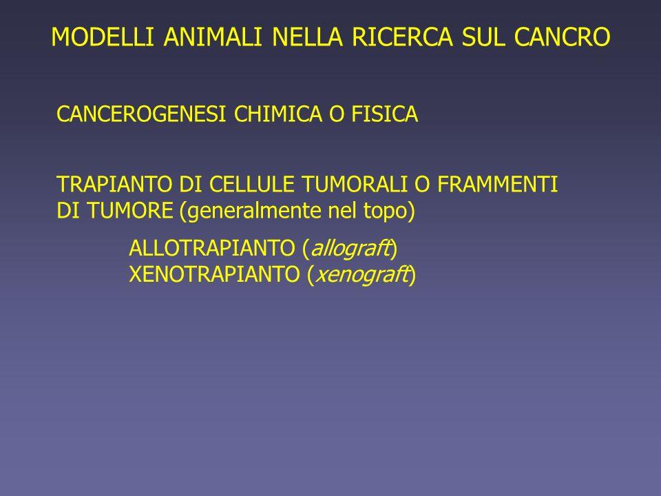 TRAPIANTO DI CELLULE TUMORALI O FRAMMENTI DI TUMORE (generalmente nel topo) ALLOTRAPIANTO (allograft) XENOTRAPIANTO (xenograft) MODELLI ANIMALI NELLA