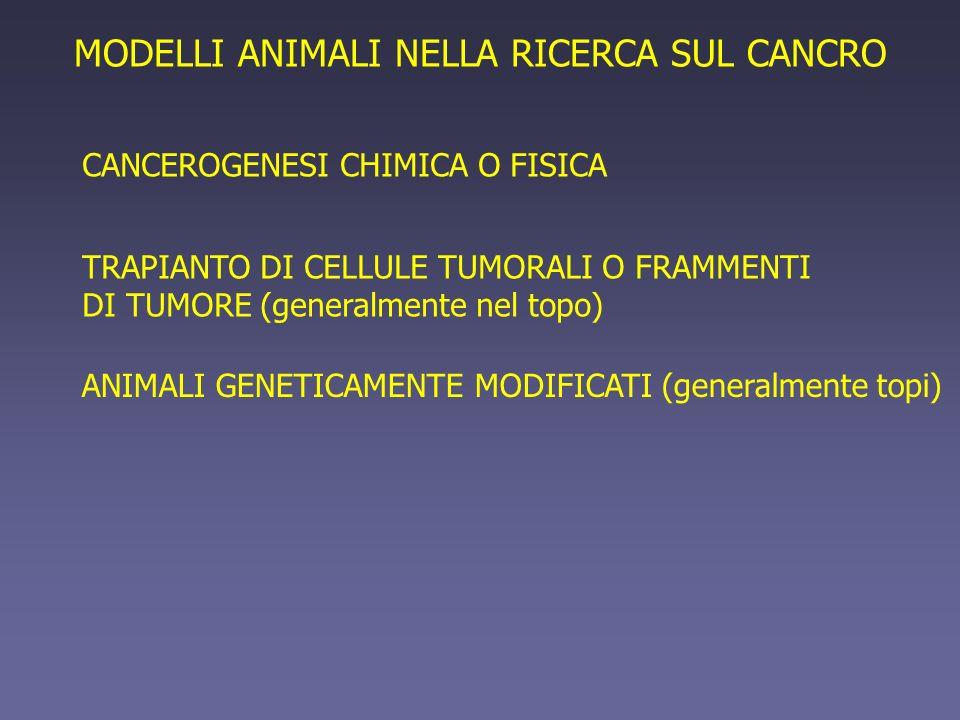 TRAPIANTO DI CELLULE TUMORALI O FRAMMENTI DI TUMORE (generalmente nel topo) MODELLI ANIMALI NELLA RICERCA SUL CANCRO CANCEROGENESI CHIMICA O FISICA AN