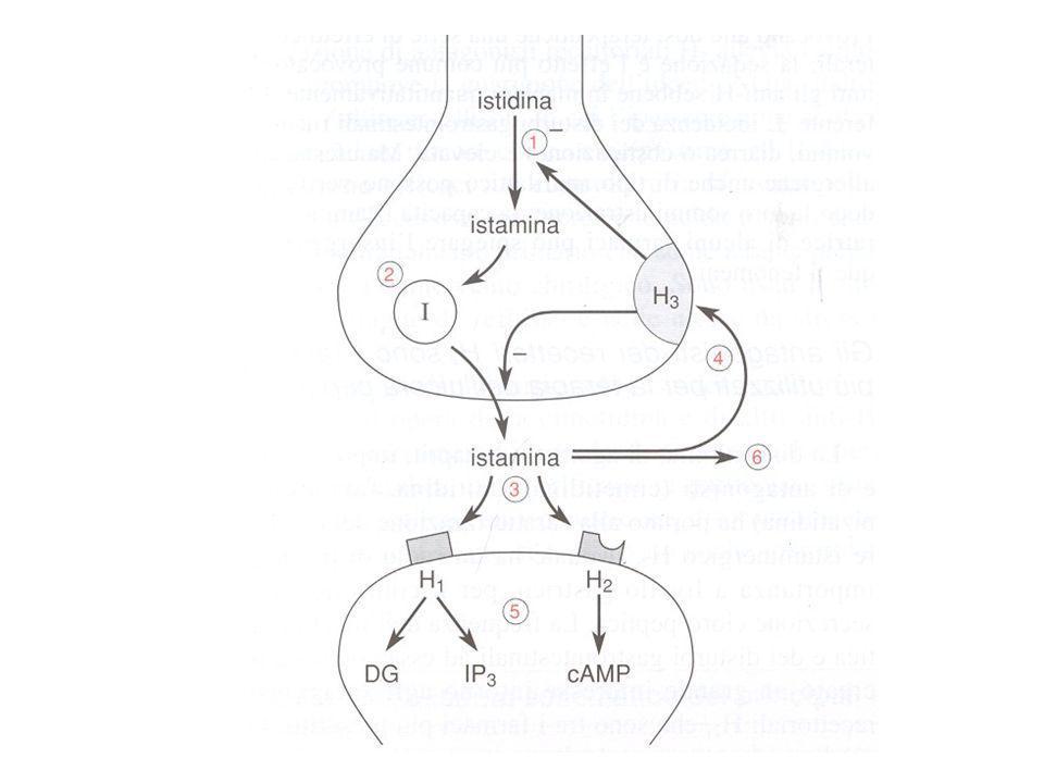 ANTAGONISTI DEL RECETTORE H 1 (ANTI-ISTAMINICI)