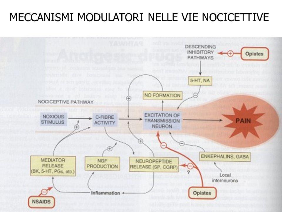 MECCANISMI MODULATORI NELLE VIE NOCICETTIVE