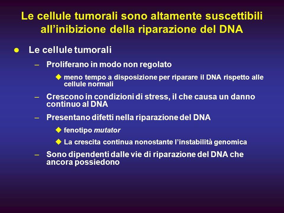 Le cellule tumorali sono altamente suscettibili allinibizione della riparazione del DNA Le cellule tumorali –Proliferano in modo non regolato meno tem