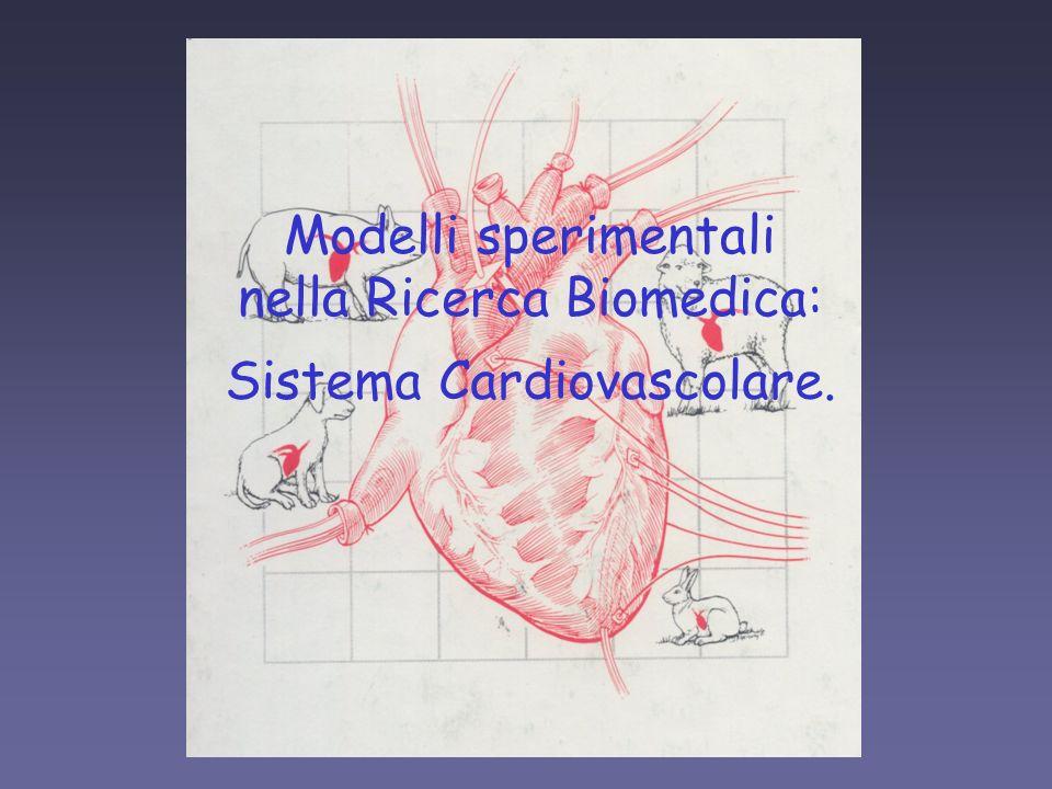 Modelli sperimentali per studi sul sistema cardiovascolare modelli in vitro miocardiociti isolati preparati cardiaci preparati vascolari