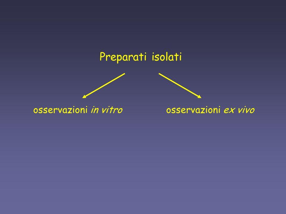 Preparati isolati osservazioni in vitroosservazioni ex vivo