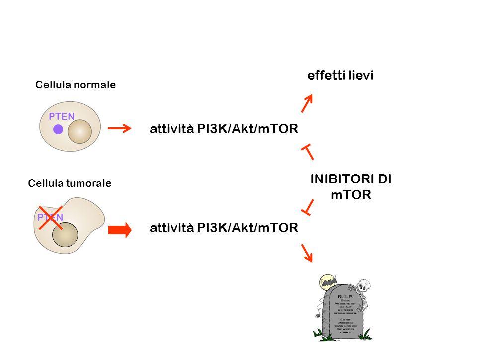 Cellula normale Cellula tumorale PTEN INIBITORI DI mTOR effetti lievi attività PI3K/Akt/mTOR attività PI3K/Akt/mTOR PTEN