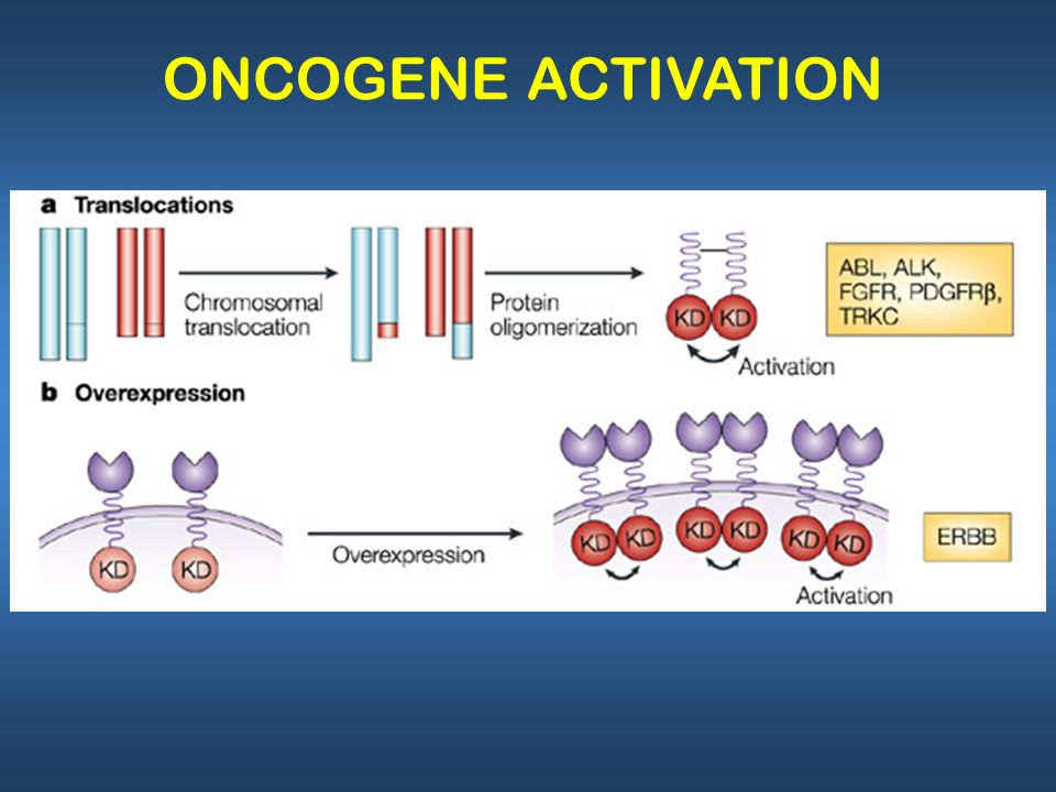 Weinstein IB and Joe AK (2006) Mechanisms of Disease: oncogene addictiona rationale for molecular targeting in cancer therapy Nat Clin Pract Oncol 3: 448–457 10.1038/ncponc0558 Table 1 Examples of oncogene addiction: studies in mice