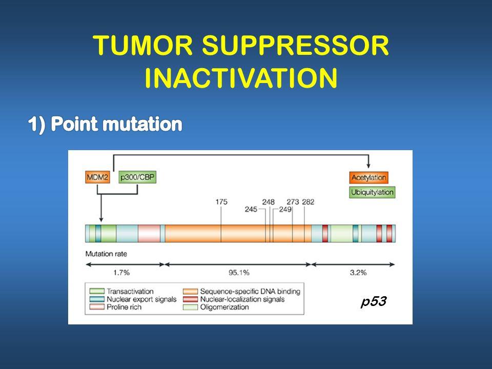 TUMOR SUPPRESSOR INACTIVATION p53