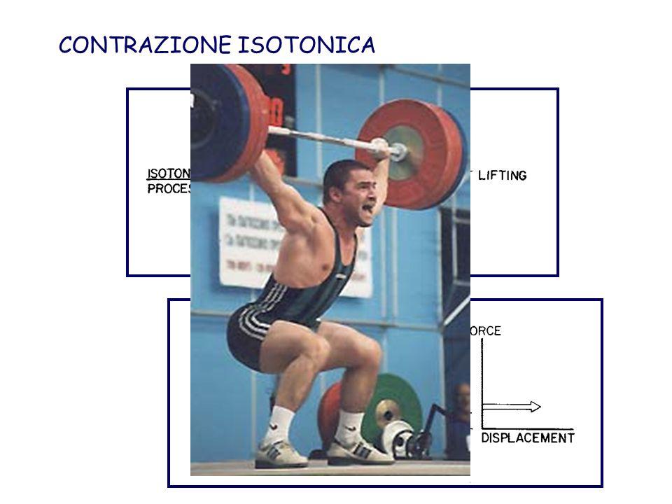 CONTRAZIONE ISOTONICA