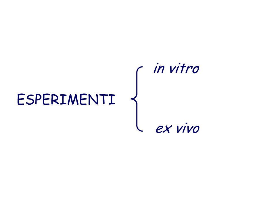 ESPERIMENTI in vitro ex vivo