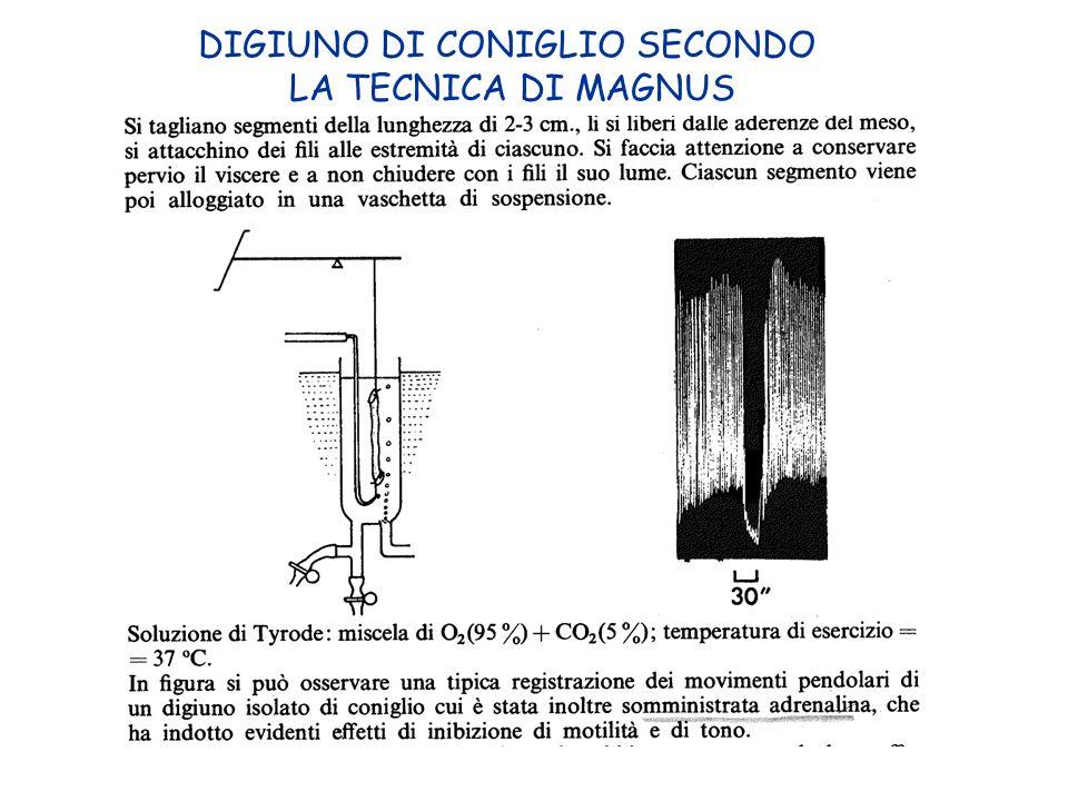 DIGIUNO DI CONIGLIO SECONDO LA TECNICA DI MAGNUS