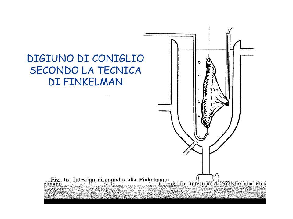 DIGIUNO DI CONIGLIO SECONDO LA TECNICA DI FINKELMAN