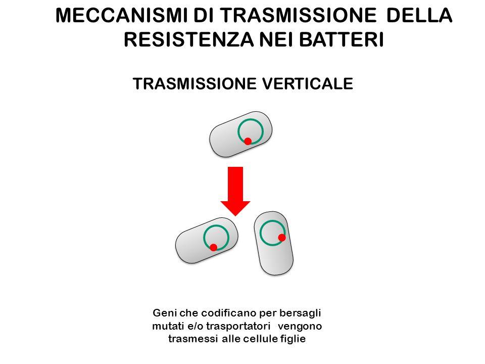 MECCANISMI DI TRASMISSIONE DELLA RESISTENZA NEI BATTERI TRASMISSIONE VERTICALE Geni che codificano per bersagli mutati e/o trasportatori vengono trasmessi alle cellule figlie