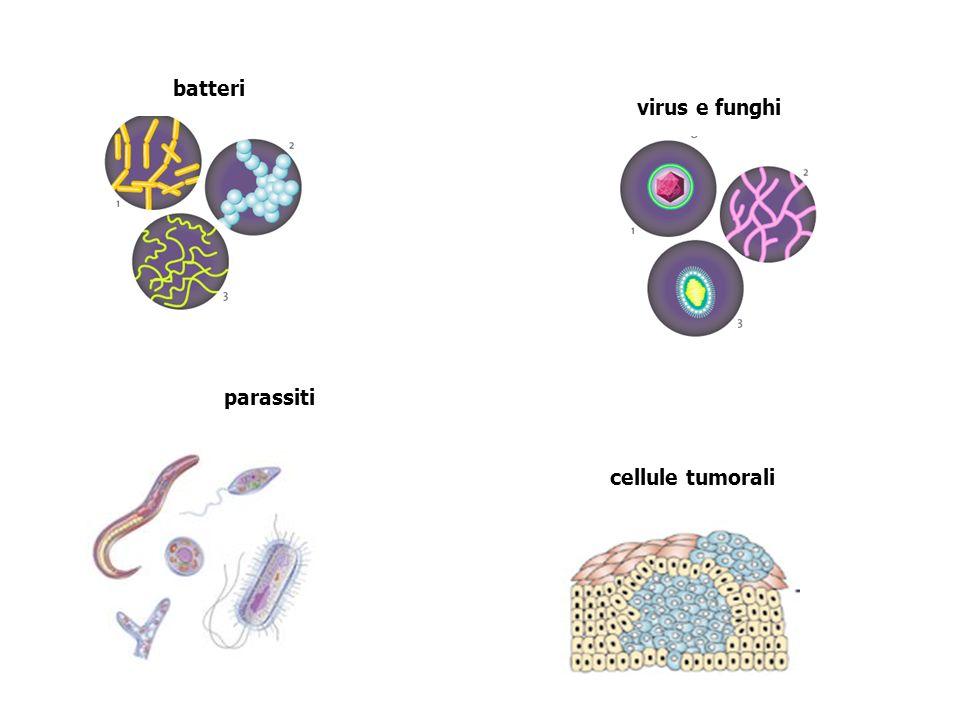 cellule tumorali batteri virus e funghi parassiti