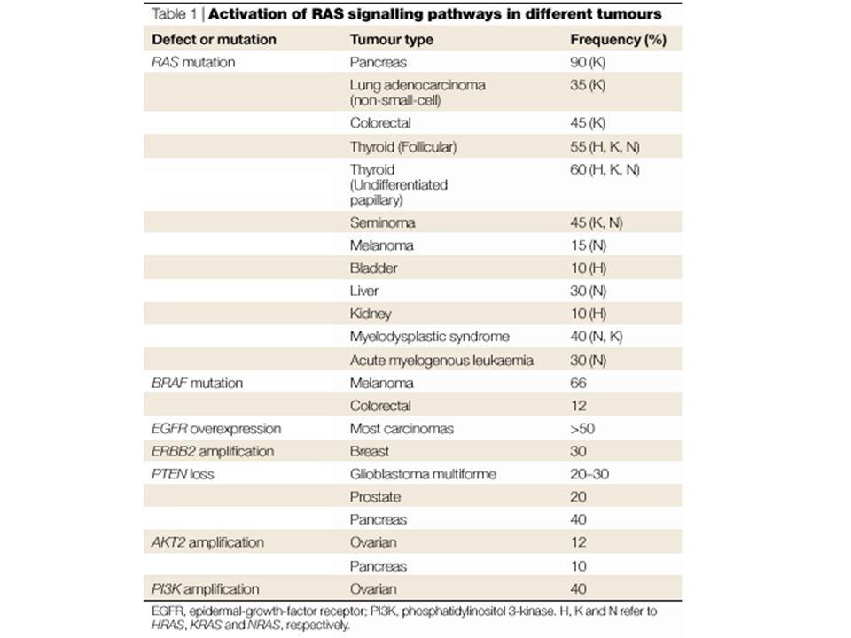 The role of MEK1/2 SHCGrb2SOS1 P P P Raf1 P MEK2 P ERK2 P P ERK1 P P MEK1 P Transcription factors Grb2, growth factor receptor-bound protein 2; SRF, serum response factor Ras SRF Transcription