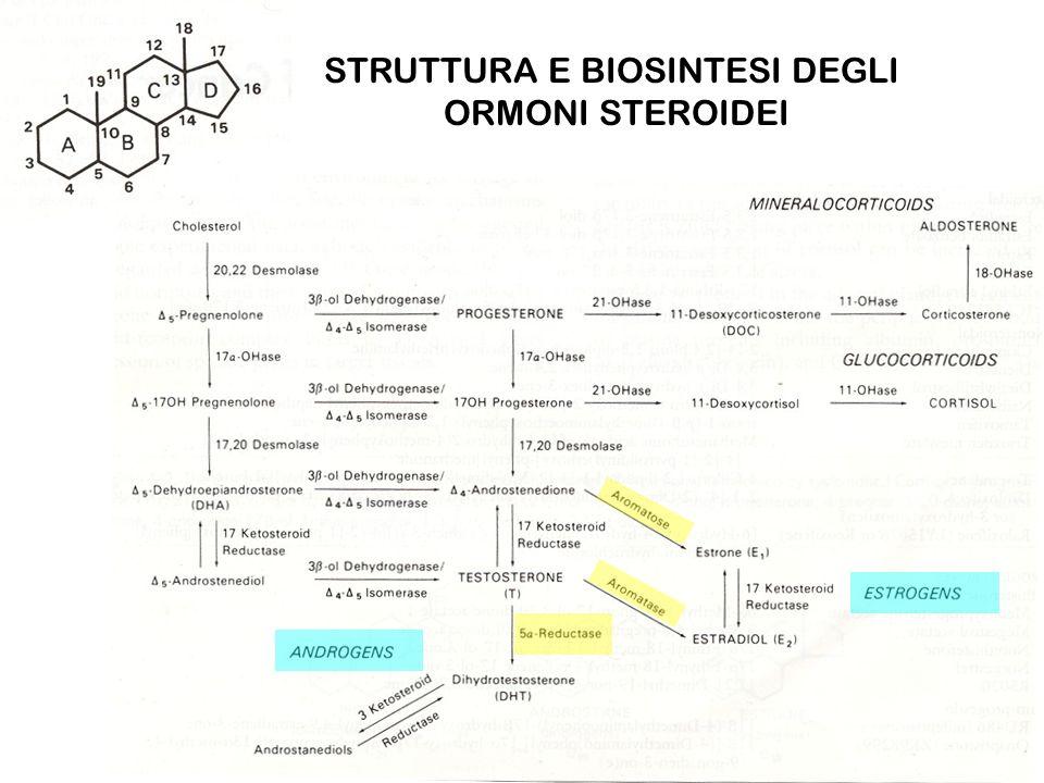 STRUTTURA E BIOSINTESI DEGLI ORMONI STEROIDEI