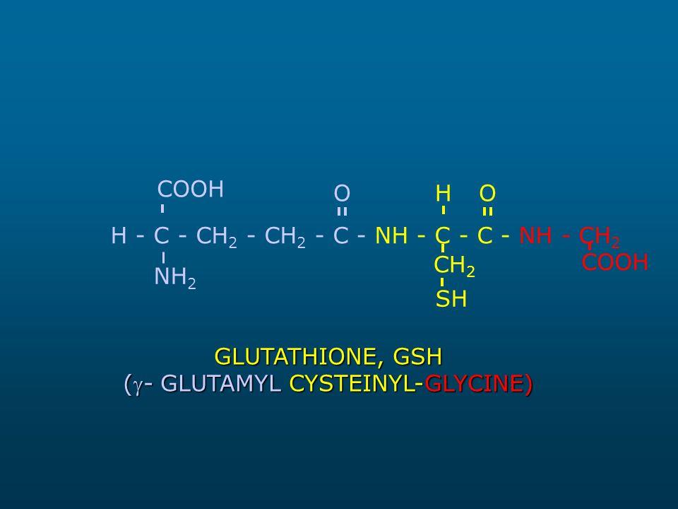 H - C - CH 2 - CH 2 - C - NH - C - C - NH - CH 2 NH 2 COOH H SH CH 2 COOH GLUTATHIONE, GSH (- GLUTAMYL CYSTEINYL-GLYCINE) OO