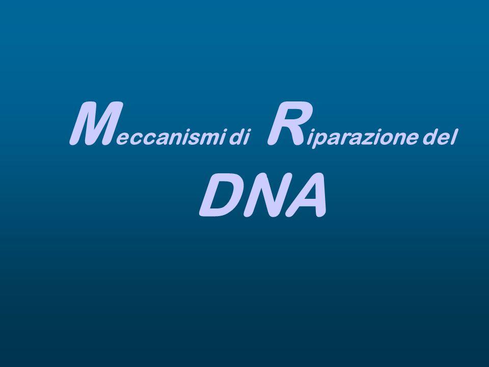 M eccanismi di R iparazione del DNA