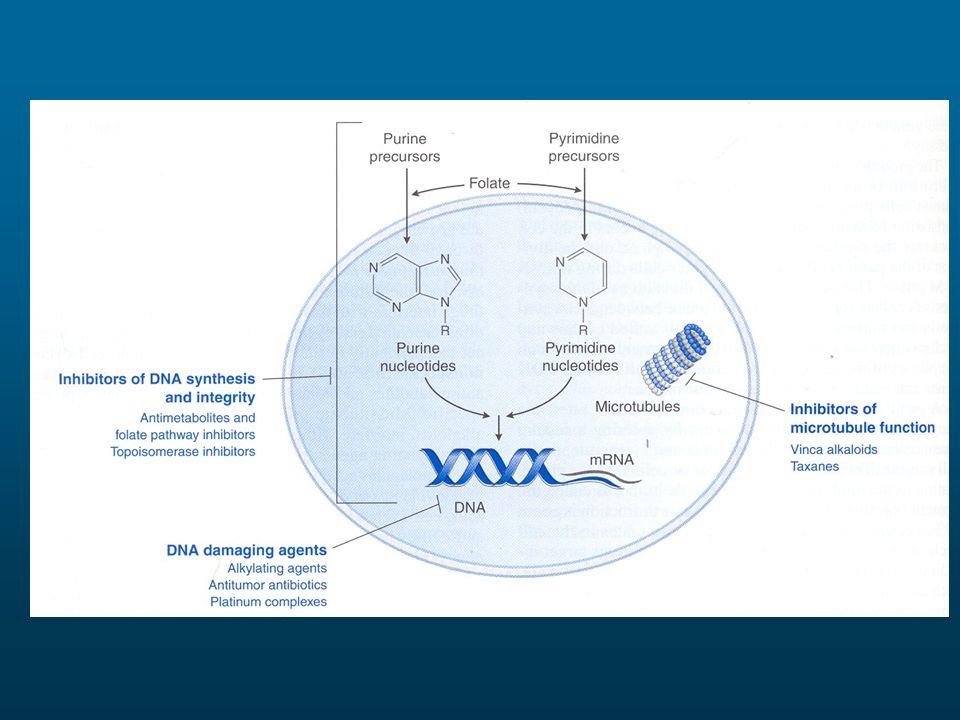 PRINCIPI DI TERAPIA CITOTOSSICA ANTITUMORALE I farmaci uccidono una frazione costante, non un numero costante, di cellule La citotossicità è proporzionale allesposizione totale al farmaco Le cellule possono manifestare diversa vulnerabilità ai farmaci citotossici a seconda della fase del ciclo cellulare I farmaci citotossici rallentano la progressione delle cellule nel ciclo cellulare La citotossicità dei farmaci non è selettiva verso le cellule tumorali