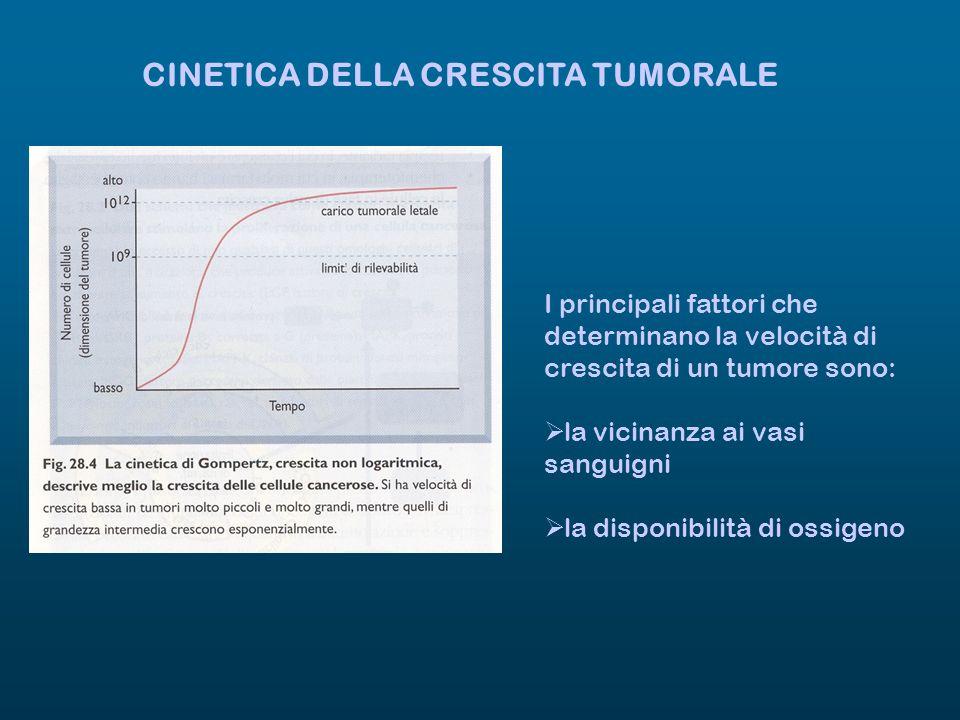 CINETICA DELLA CRESCITA TUMORALE I principali fattori che determinano la velocità di crescita di un tumore sono: la vicinanza ai vasi sanguigni la dis