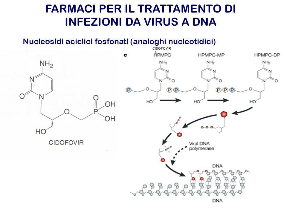 CIDOFOVIR ( ) Nucleosidi aciclici fosfonati (analoghi nucleotidici) FARMACI PER IL TRATTAMENTO DI INFEZIONI DA VIRUS A DNA