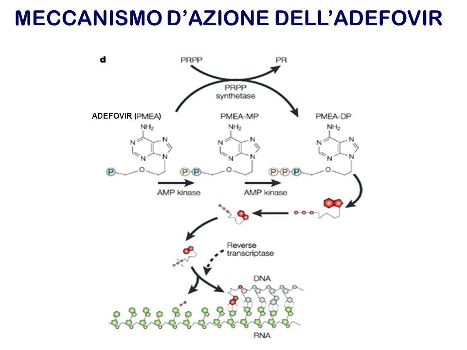 MECCANISMO DAZIONE DELLADEFOVIR ADEFOVIR ( )