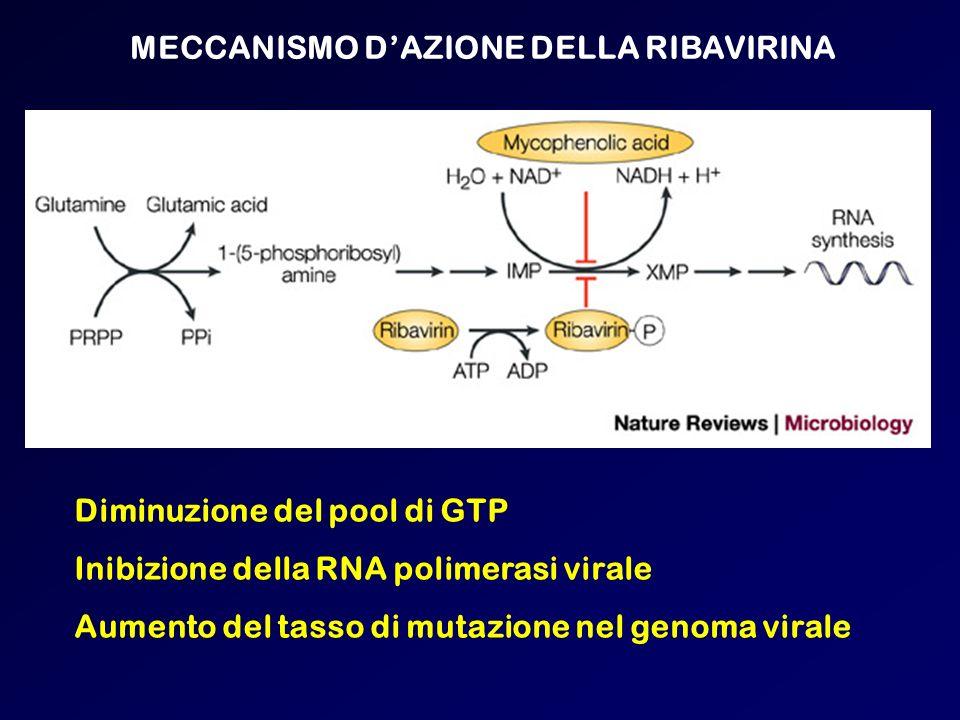 MECCANISMO DAZIONE DELLA RIBAVIRINA Diminuzione del pool di GTP Inibizione della RNA polimerasi virale Aumento del tasso di mutazione nel genoma viral