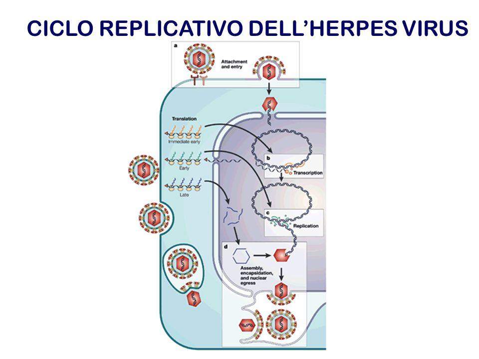 CICLO REPLICATIVO DELLHERPES VIRUS