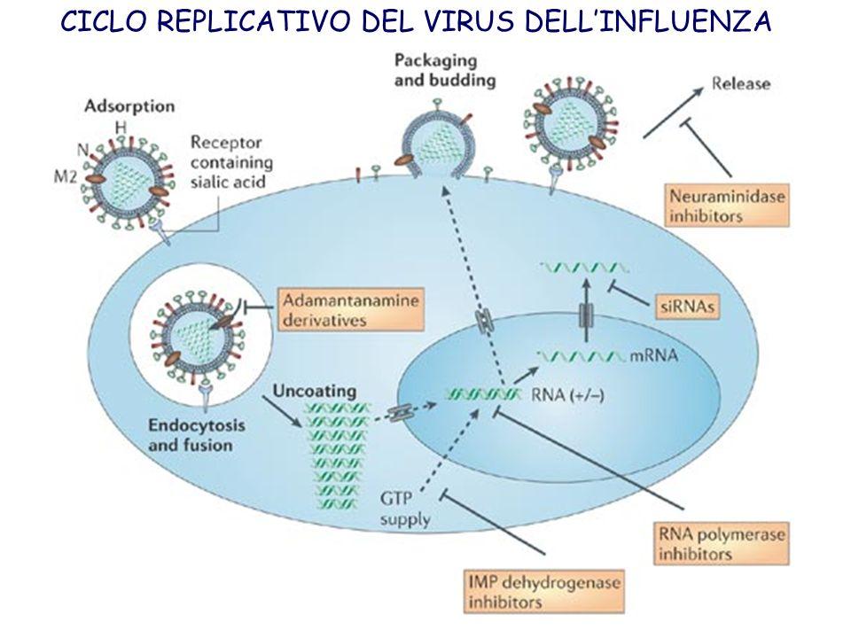 CICLO REPLICATIVO DEL VIRUS DELLINFLUENZA
