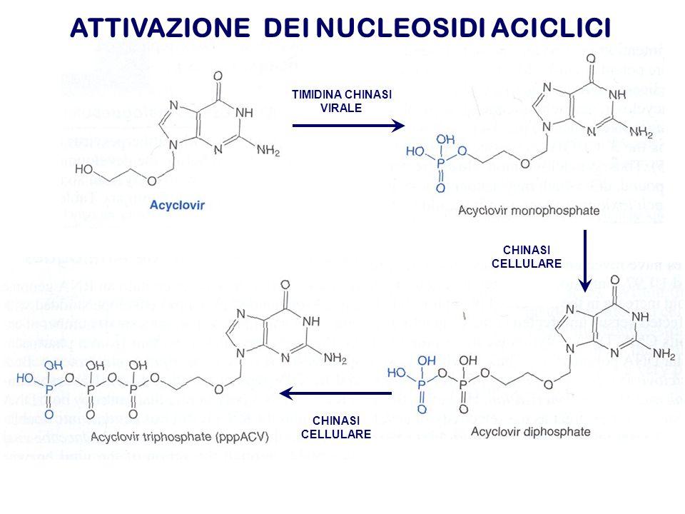 ATTIVAZIONE DEI NUCLEOSIDI ACICLICI TIMIDINA CHINASI VIRALE CHINASI CELLULARE