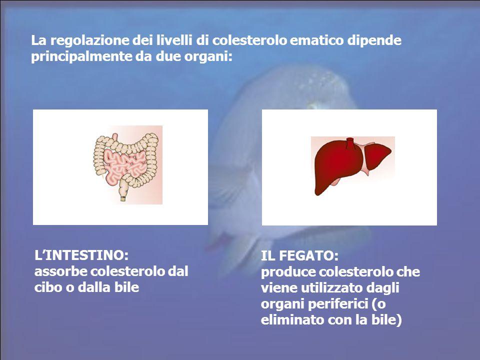 La regolazione dei livelli di colesterolo ematico dipende principalmente da due organi: LINTESTINO: assorbe colesterolo dal cibo o dalla bile IL FEGAT