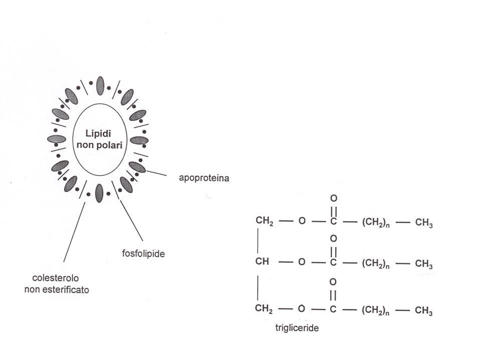 NUOVI INTERVENTI IN CORSO DI SVILUPPO CLINICO Inibizione dellassorbimento intestinale di colesterolo Inibizione dellattività della proteina CETP Attivazione dei fattori nucleari PPAR /