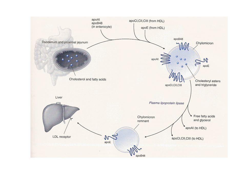 NUOVI INTERVENTI IN CORSO DI SVILUPPO CLINICO Inibizione dellassorbimento intestinale di colesterolo Inibizione dellattività della proteina CETP Attivazione dei fattori nucleari PPAR / Attivazione del fattore nucleare LXR