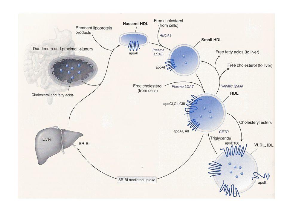 FATTORI CHE DETERMINANO LIVELLI BASSI DI HDL COLESTEROLO Eccessiva assunzione di carboidrati (>60% dellapporto calorico totale) Stile di vita sedentario Obesità/sovrappeso Sindrome metabolica Diabete mellito di tipo II Ipertrigliceridemie Ipo- -lipoproteinemia primaria Insufficienza renale cronica Sindrome nefrotica AIDS/lipodistrofia Uso di alcuni farmaci (diuretici tiazidici, β-bloccanti, steroidi anabolizzanti, progestinici, agenti antiretrovirali) Fumo
