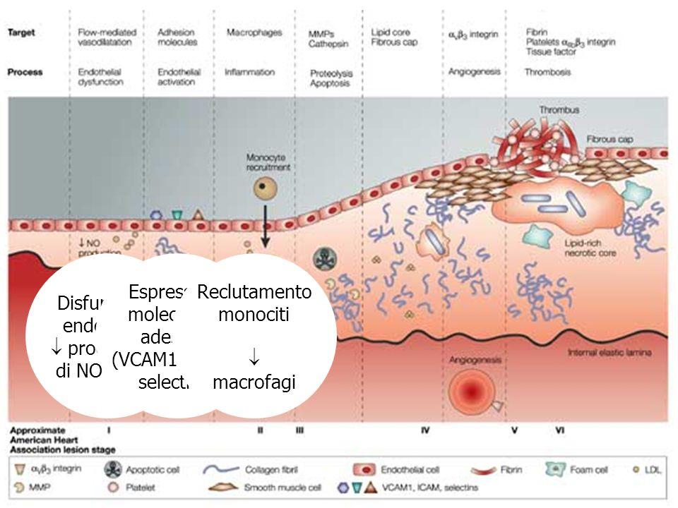NIACINA o ACIDO NICOTINICO AZIONI: Blocco della lipolisi dei TG da parte della lipasi ormone- sensibile nel tessuto adiposo Aumento dellattività della lipoproteina lipasi Diminuzione clearance frazionale di apoAI