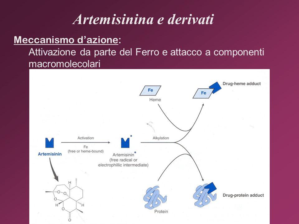 Artemisinina e derivati Meccanismo dazione: Attivazione da parte del Ferro e attacco a componenti macromolecolari
