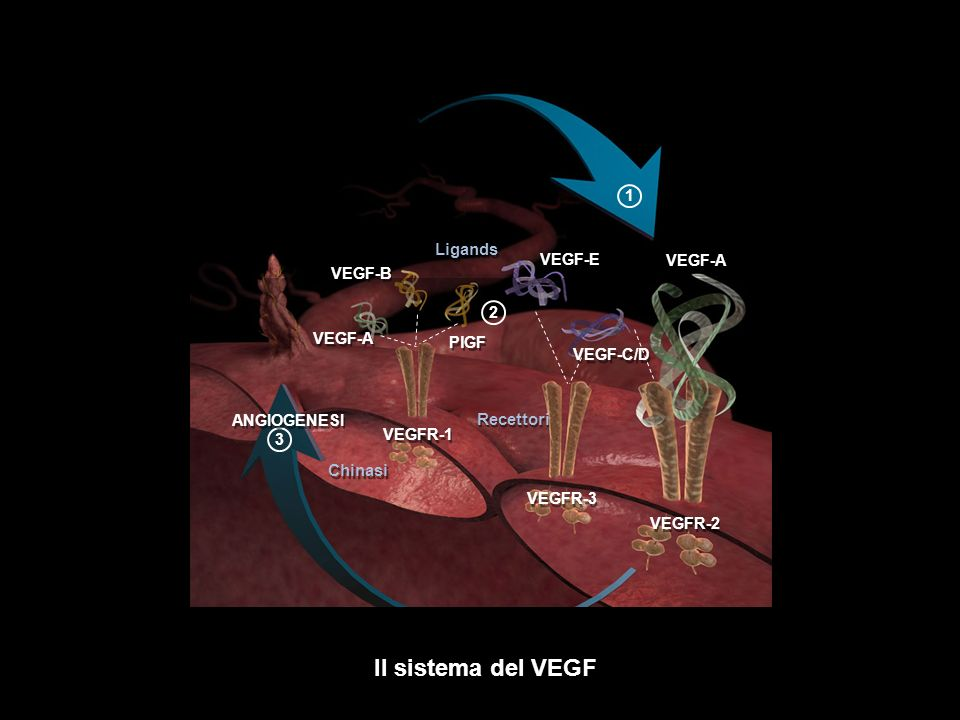 Il sistema del VEGF 32 ANGIOGENESI VEGFR-2 VEGFR-1 VEGFR-3 VEGF-A PlGF VEGF-A VEGF-C/D VEGF-B Ligands Recettori Chinasi VEGF-E 1