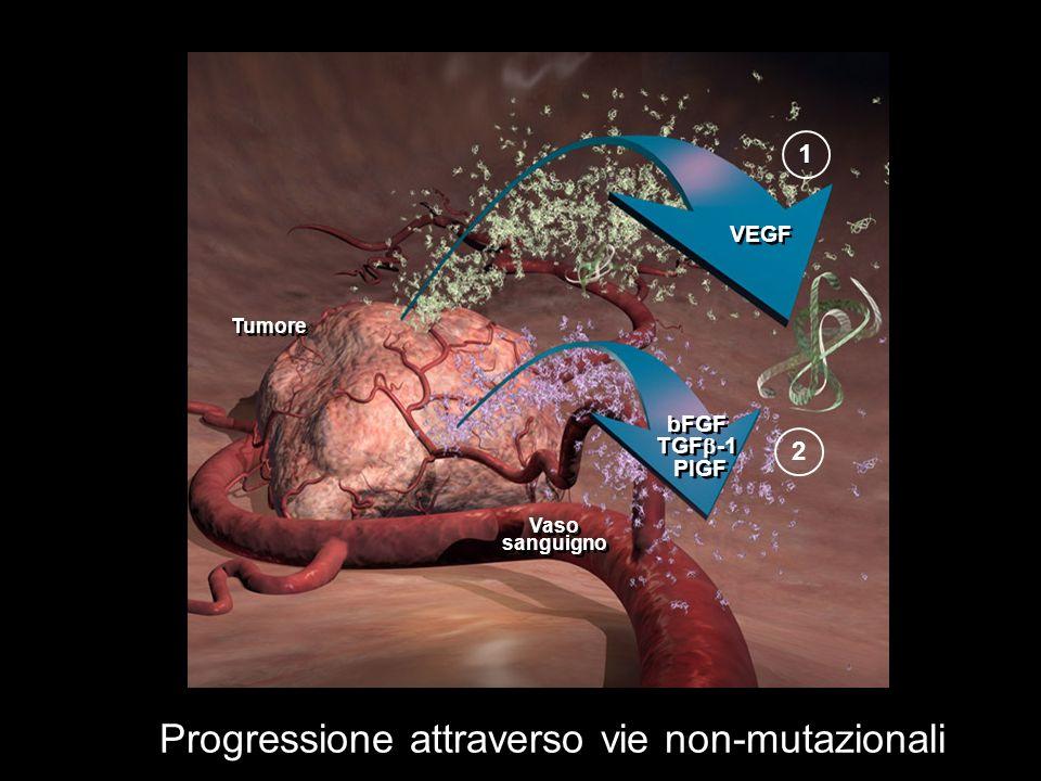 Progressione attraverso vie non-mutazionali Tumore Vaso sanguigno VEGF bFGF TGF -1 PIGF bFGF TGF -1 PIGF 12