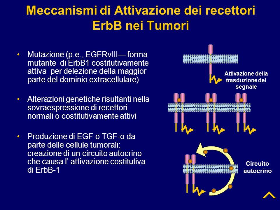 Meccanismi di Attivazione dei recettori ErbB nei Tumori Mutazione (p.e., EGFRvIII forma mutante di ErbB1 costitutivamente attiva per delezione della m