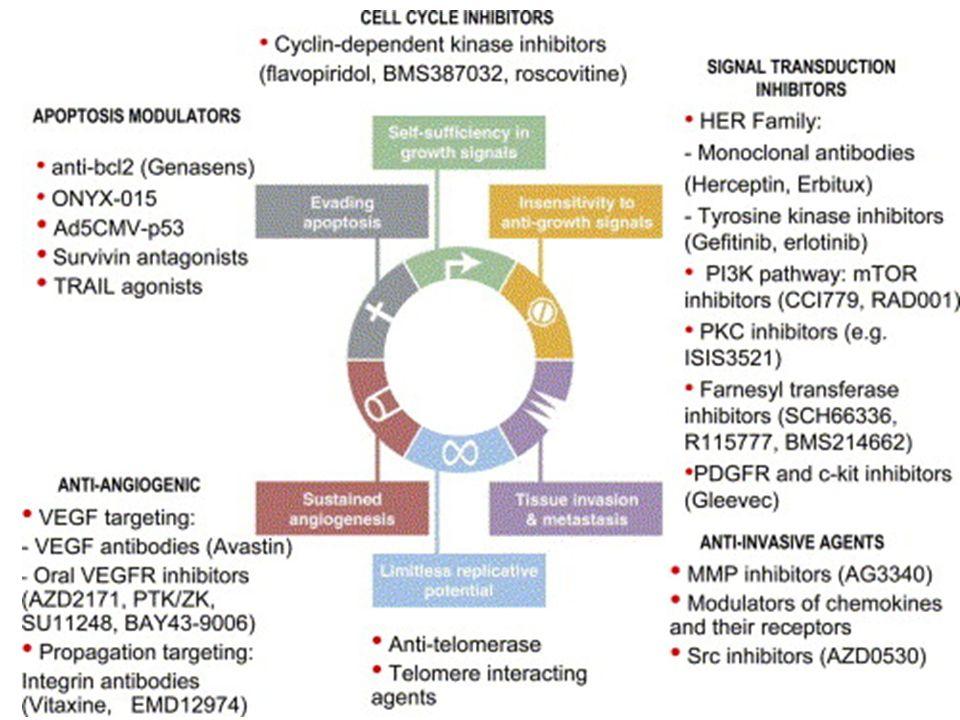 Strategie per linibizione dei recettori ErbB MAbs in grado di bloccare linterazione con il ligando o la dimerizzazione dei recettori Inibitori chinasici a basso peso molecolare Antagonisti competitivi del recettore Coniugati ligando-tossina o Ab-tossina Oligonucleotidi antisenso Vaccini Inibitore chinasico Ligando- tossina Antagonista MAb