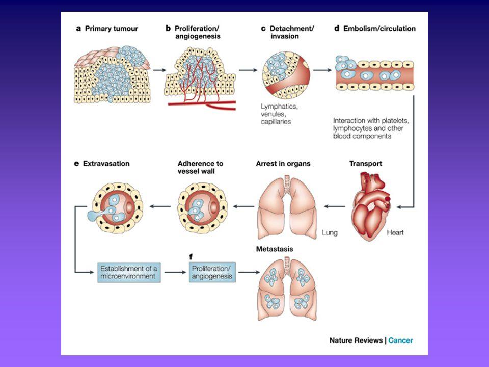 EFFETTI DELLINIBIZIONE CONTINUATA DEL VEGF Regressione della rete microvascolare 1-4 esistente Normalizzazione dei vasi maturi sopravvissuti Inibizione della ricrescita vascolare e della neovascolarizzazione 123 213