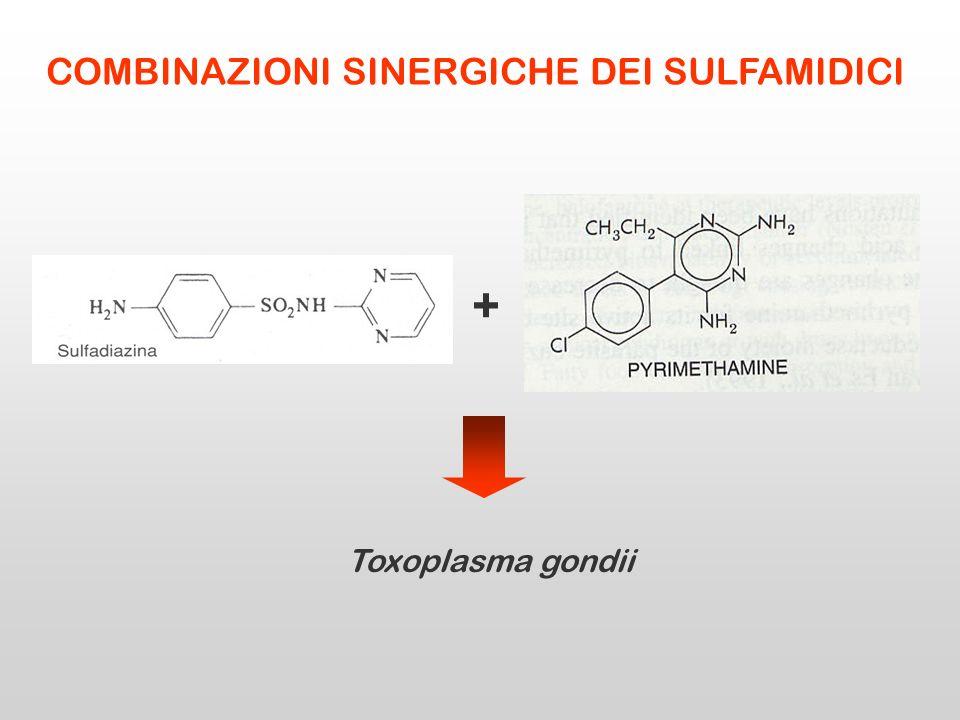 + Toxoplasma gondii COMBINAZIONI SINERGICHE DEI SULFAMIDICI