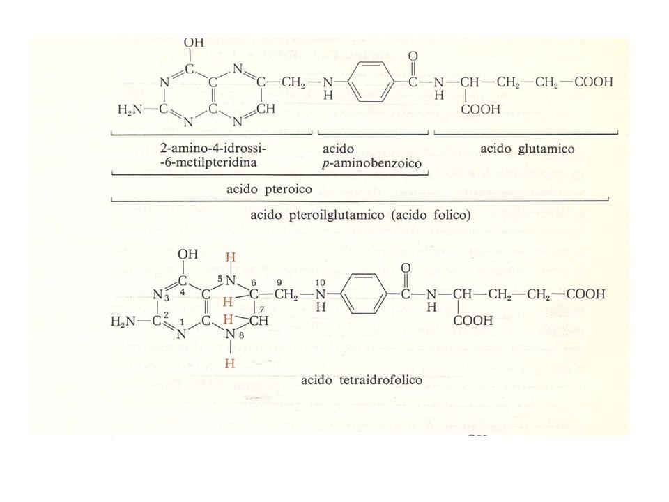 + = COTRIMOSSAZOLO (BACTRIM®) H.influenzae, P.